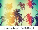 palm trees over sky on beach ... | Shutterstock . vector #268813541