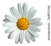 Marguerite Isolated On White