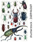 insects  beetles and scarab ... | Shutterstock . vector #268946369