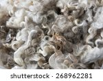 Small photo of Close up of Unwashed Raw Sheep Wool in Natural Color