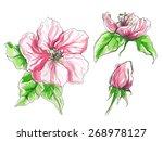 apple flower in blossom | Shutterstock .eps vector #268978127