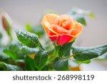Gardening  Planting  Floristic...
