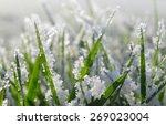 Frozen Green Grass Close Up....