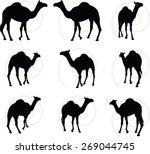 Vector Image   Camel In Walkin...