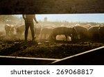 farmer feeding livestock | Shutterstock . vector #269068817