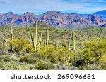 Hewitt Canyon With Saguaros In...