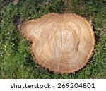 Destruction Of Trees For The...