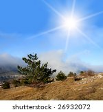 Pines in mountain - stock photo