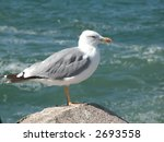 Seagull Sitting On The Stone O...