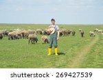 the young shepherd in the field ... | Shutterstock . vector #269427539
