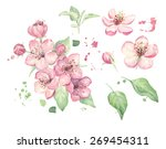 watercolor spring flowers | Shutterstock . vector #269454311