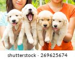 Stock photo puppy 269625674