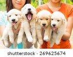 Stock photo puppy 269625674