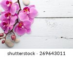 pink orchid with buds. greeting ... | Shutterstock . vector #269643011