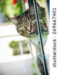 Stock photo peeping cat 269667401
