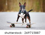 Stock photo english bull terrier dog on a skateboard 269715887