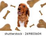 Top View Of Dog Food Treats...