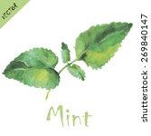 mint leaves in watercolors.... | Shutterstock .eps vector #269840147