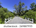 California White Oak Tree With...