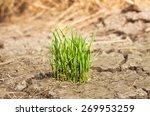grass in the soil | Shutterstock . vector #269953259