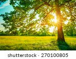 summer sunny forest trees and... | Shutterstock . vector #270100805