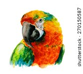 Hand Drawn Parrot Head  Macaw...