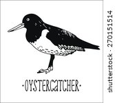 Oyster Catcher Vector...