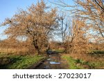Trees with dry leaves on meadow - sign of autumn. Dirty, country, side road. - stock photo