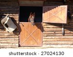 Horse In The Window Of Barn On...