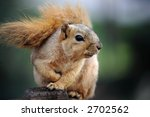 Cute Squirrel Sitting In Deck...