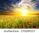 field with green grass and red... | Shutterstock . vector #270289217
