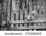 Squirrel On The Bench