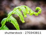 Exotic Tropical Ferns With...