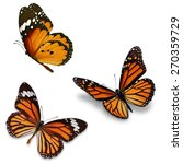 three monarch butterfly ... | Shutterstock . vector #270359729