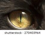 Macro shoot of black cat eye...
