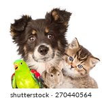 Stock photo group of animals closeup isolated on white background 270440564