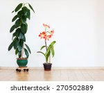 Green Home Plant Ficus In...