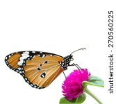 Butterfly On Flower Isolated O...