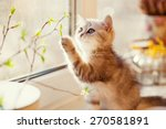 Stock photo cute little kitty playing with green leaves 270581891