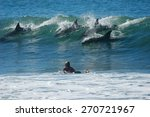 A School Of Dolphins Ride A...