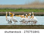pelicans in natural habitat | Shutterstock . vector #270751841