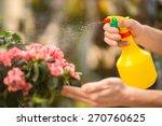 Male Florist Spraying Flowers...