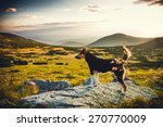 mountain dog | Shutterstock . vector #270770009