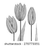 illustrated three large tulip...   Shutterstock . vector #270773351