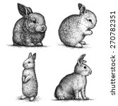 black and white rabbit isolated.... | Shutterstock . vector #270782351