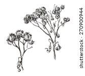 hand drawn dry branch of burdock | Shutterstock .eps vector #270900944
