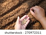 close up farmer hand sawing... | Shutterstock . vector #270972311