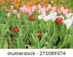 multicolored tulip flowers | Shutterstock . vector #271089374