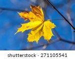 Single Autumn Yellow Maple...