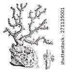 Coral Branch  Vintage Engraved...